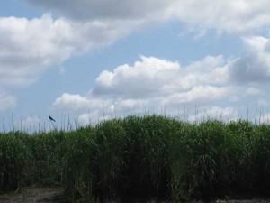 bird-over-salt-marsh
