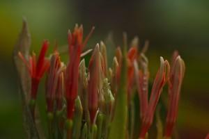 Blood Lily beginning