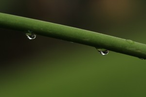 more stems with drops
